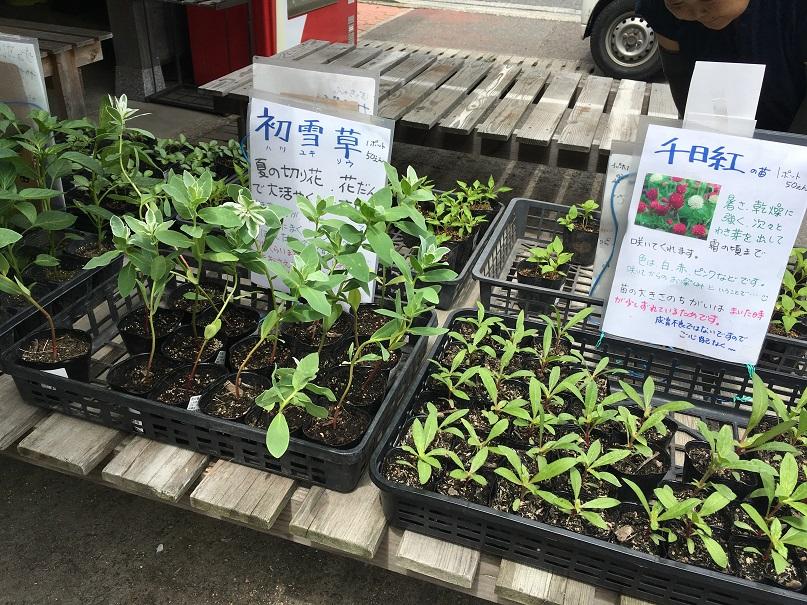 道の駅しおのえで販売しているポットのお花