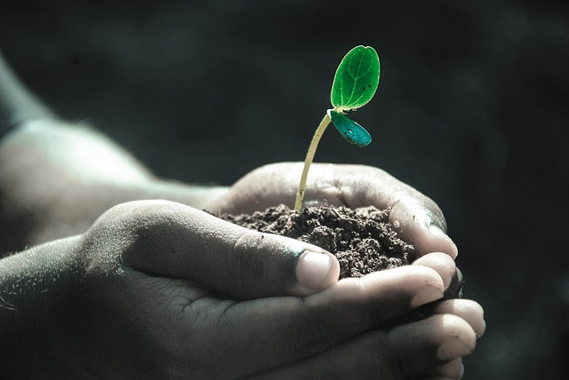 土を手ですくっている、土の中に植物の芽がでている