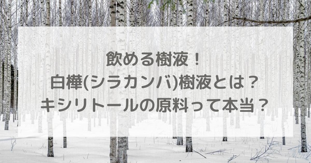 飲める樹液!白樺(シラカンバ)樹液とは?キシリトールの原料って本当?