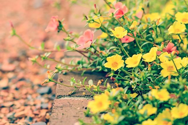 花壇に花が咲いている写真