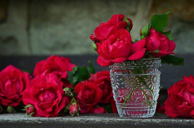 真っ赤なバラの写真